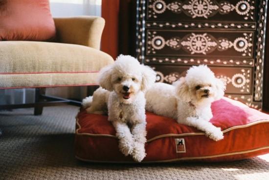 Как открыть гостиницу для животных (2)