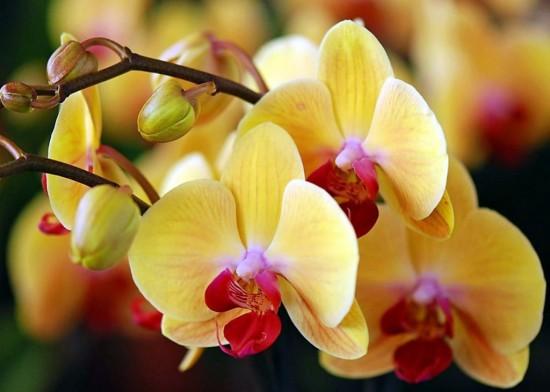 орхидеи 3