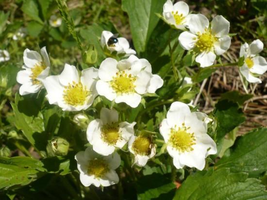 Садоводство - как один из способов раскрытия творческого потенциала 3