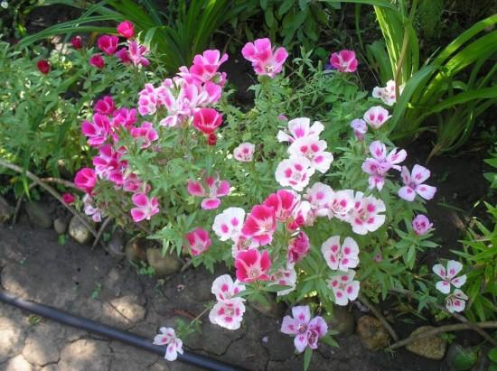 Выращивание цветов – удовольствие и радость3