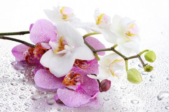 Разведение цветов, как хобби