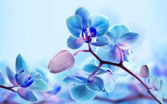 Разведение цветов, как хобби2